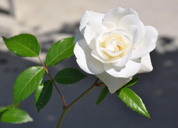 fleurs-ete-et-merci 0351