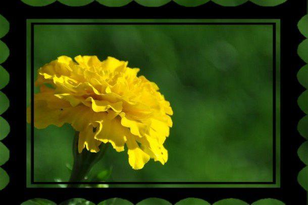 fleur (17)