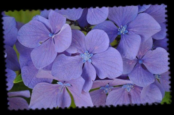 fleurs-juillet-2012 0475