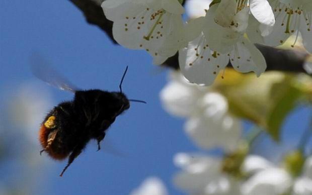 fleur d'avril (48)