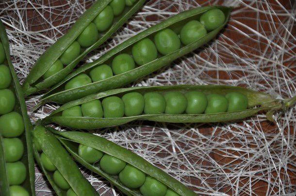 autour-d-un-legume 0240