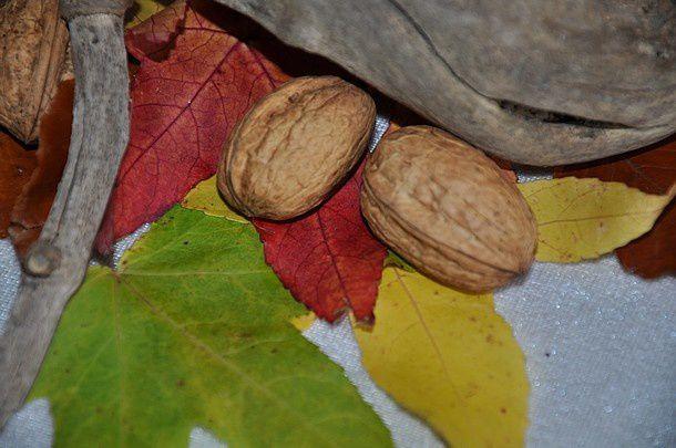 couleurs-d-automne 0139