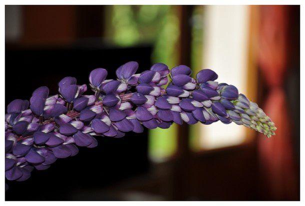 douceur-fleurie 0050