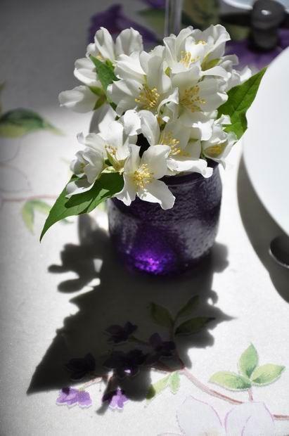violet-fleuri 0204