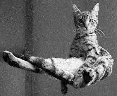 levitating-cat-thumb-400x328-29187.jpg