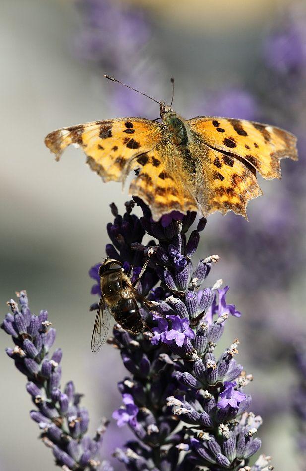 Papillons 2329