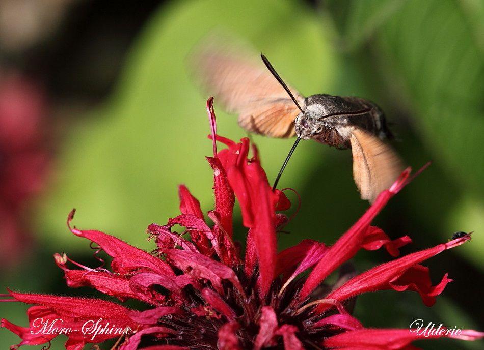 Papillons et Chenilles 2389 T