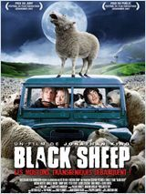 black-sheep.jpg