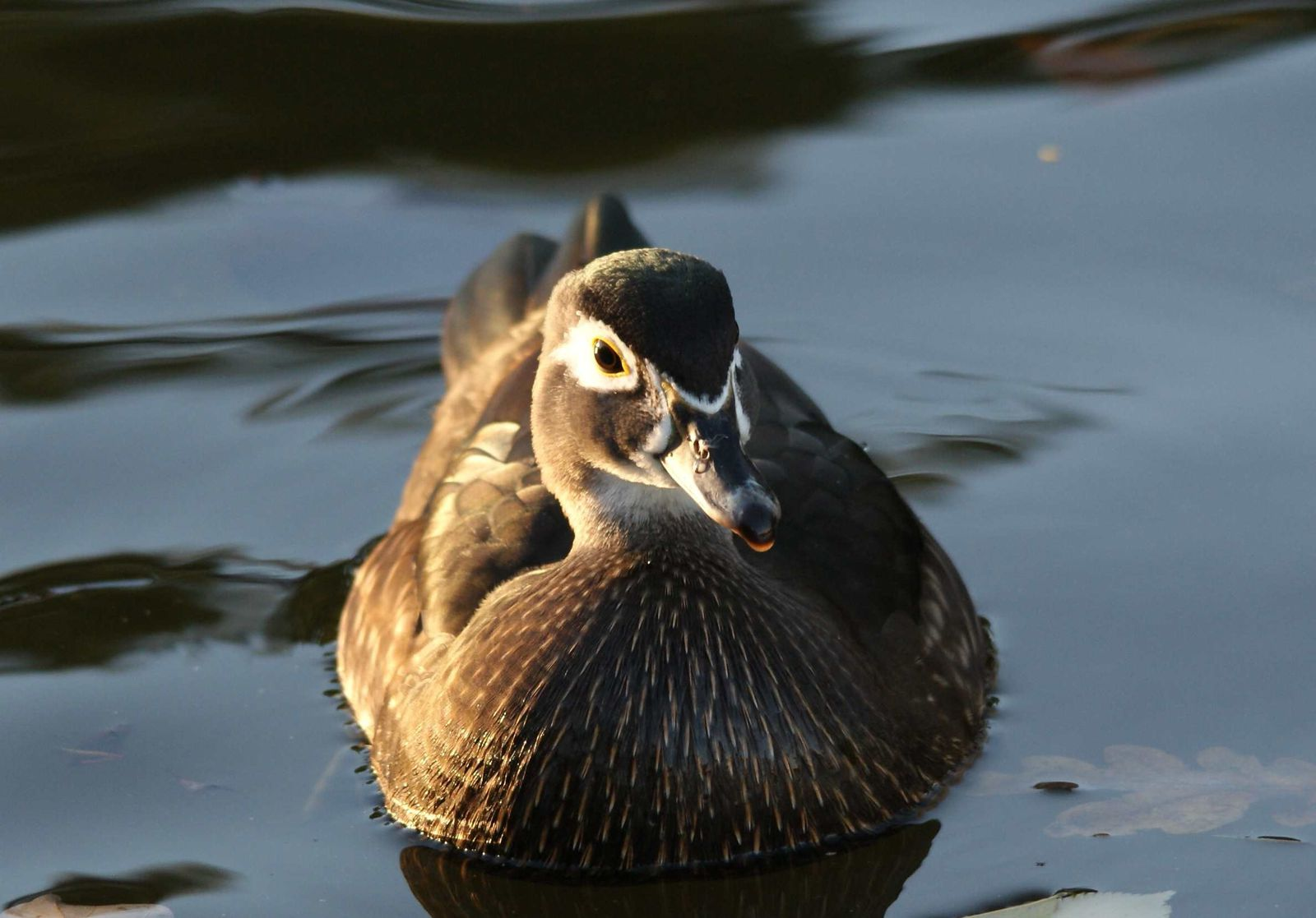 Oiseaux d'eau