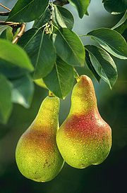 180px_Pears