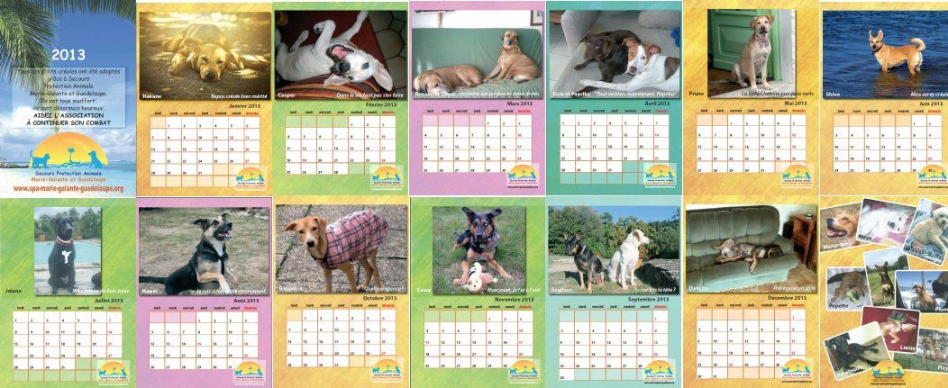 Calendrier Animaux.Calendriers 2013 Defense Animaux Creoles
