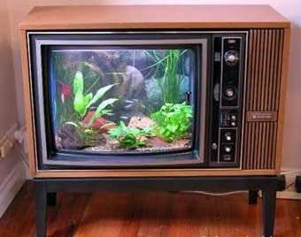 aquarium-tv-17c151d.jpg