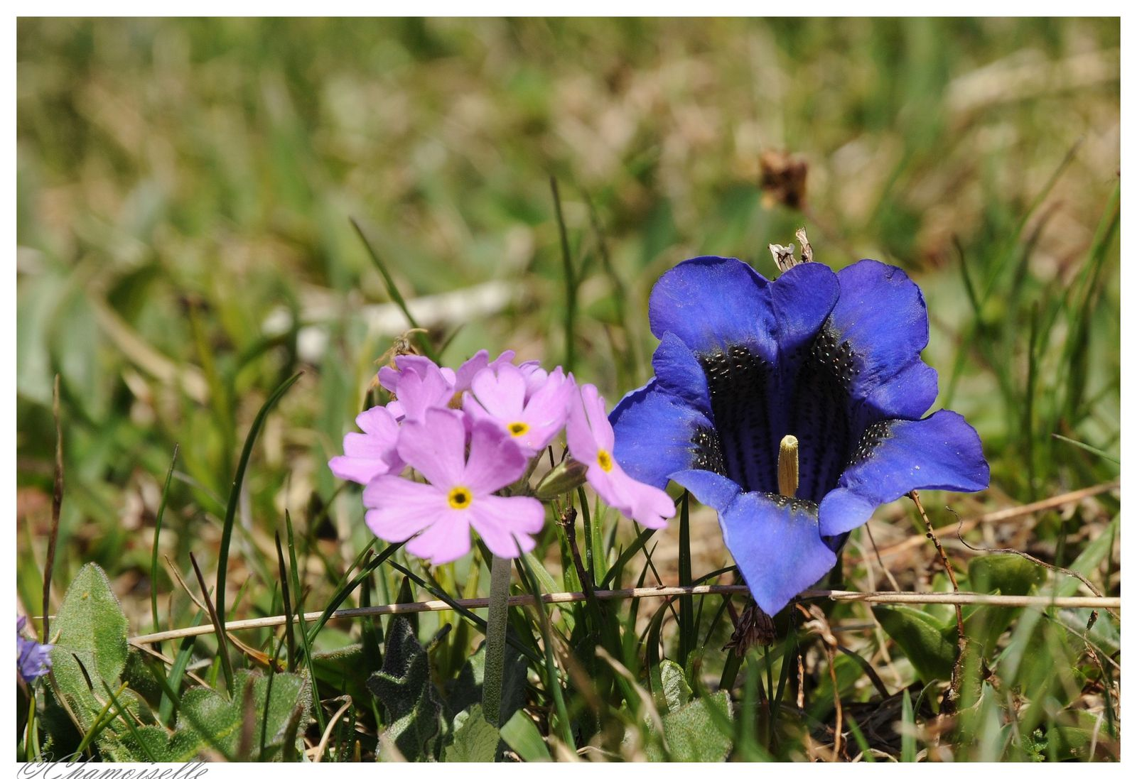 Album - fleurs-et-paysages