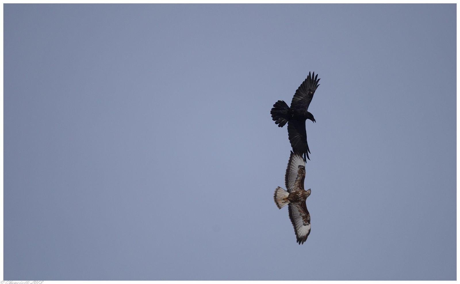 Album - oiseaux-2013