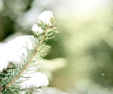 Neige hiver froid