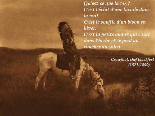 Cheaf-blackfeet-.png