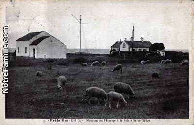 cartes-postales-photos-Moutons-au-Paturage-a-la-Pointe-Sain.jpg