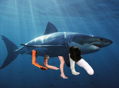 shark-copy.jpg