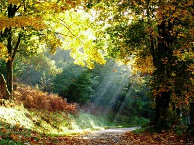 brume-soleil-meilleure-photo-illustrer-automne 175207