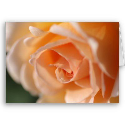 rose_couleur_peche_carte-p137689278586928430b21fb_400.jpg