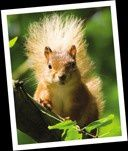 squirrels-a.jpg
