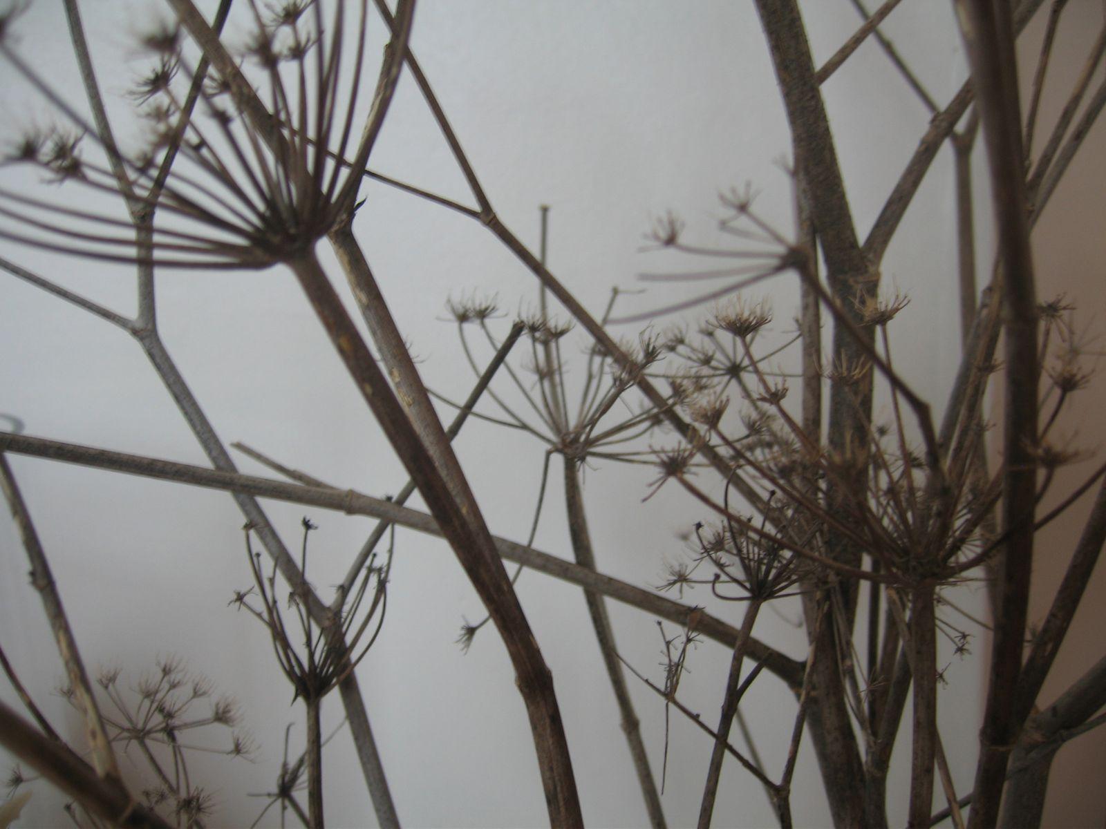Album - Bouquets du jardin