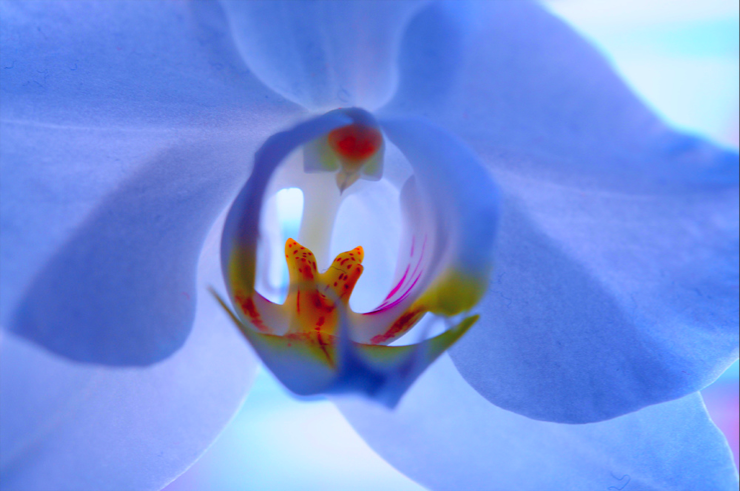 White-orchid---niji-graphein.png