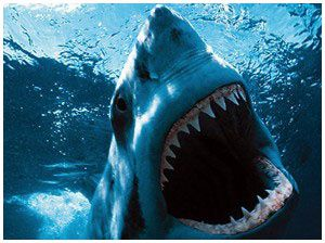 requin-shark-night-3d.jpg