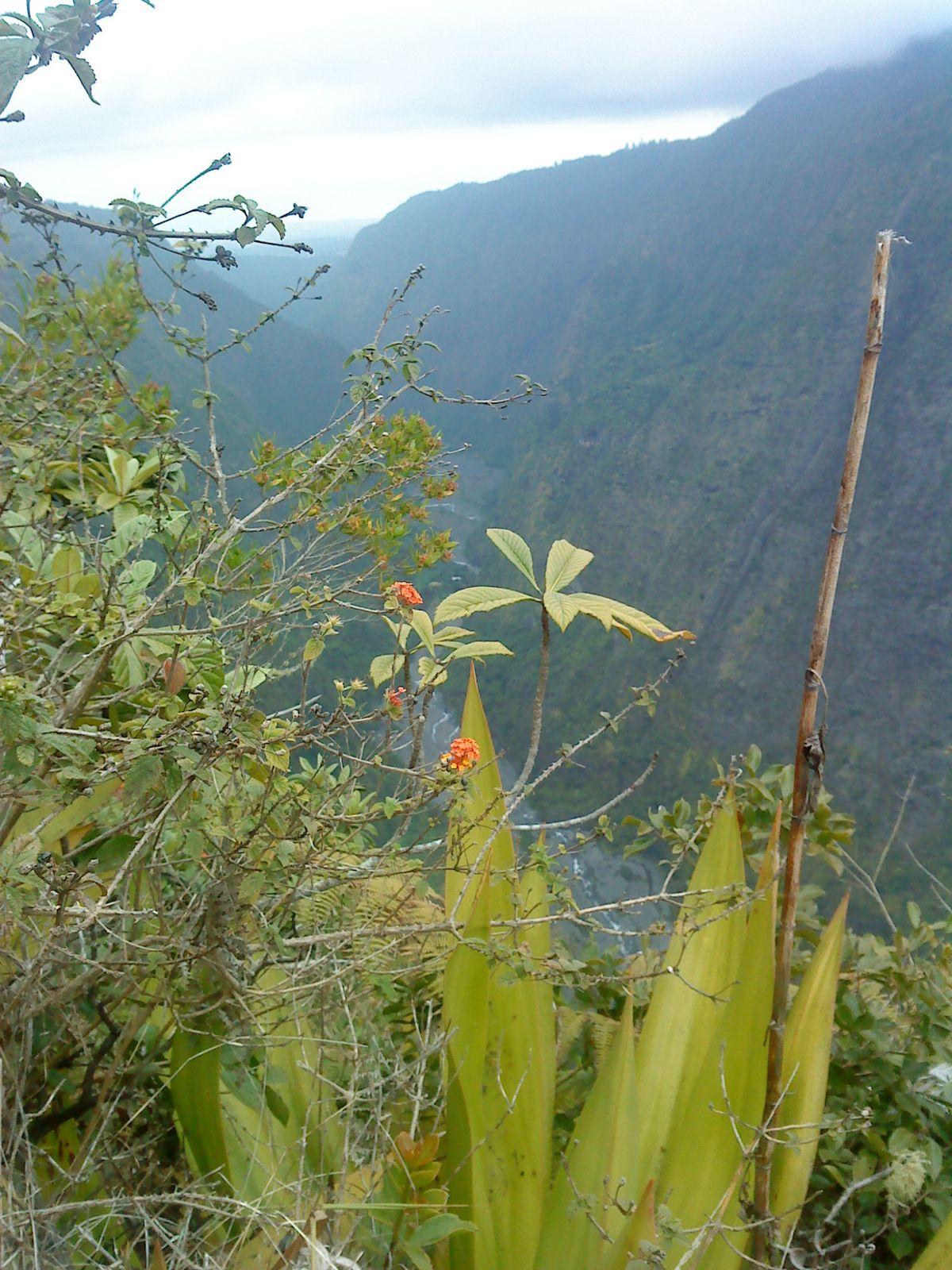 6 jours intenses pour aller plus loin dans ma découverte de l'Ile.De Bourg Murat,entre la plaine des palmiste et celle des Caffres à 1300 d'altitude,nuages et brouillard , le temps change aussi vite que les nuages qui passent. Nous partons explorer
