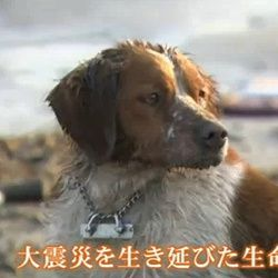 chien-japon-tsunami-secours-video
