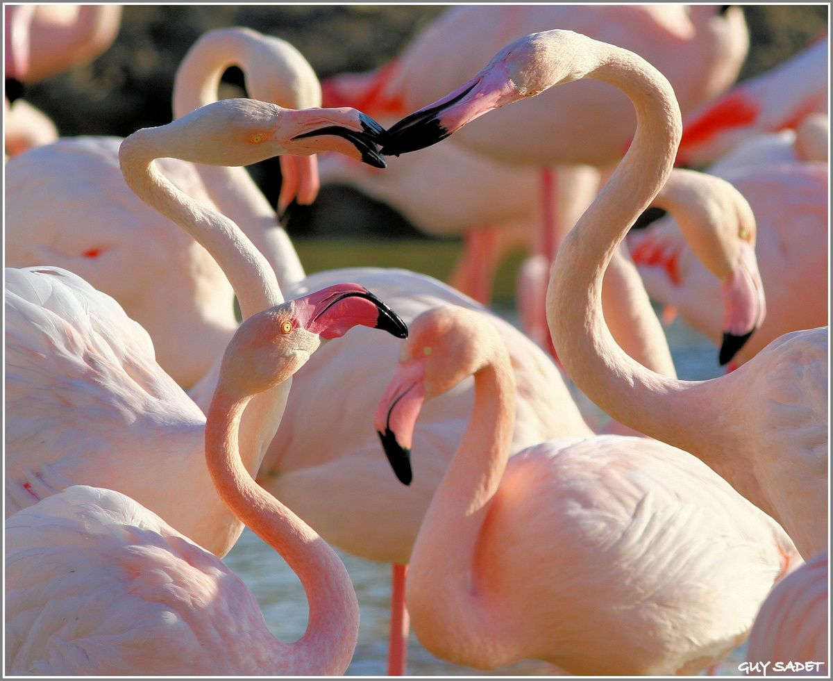 flamants roses canet soins