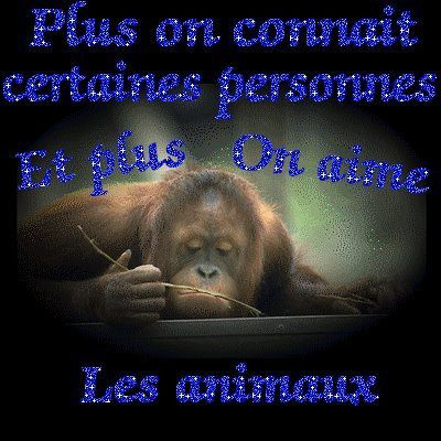 a animaux