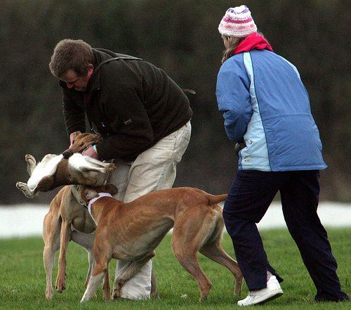 two coursing fans with dying hare