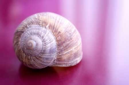 z8142166AA-Symbolem-Slow-Life-jest-najpowolniejsze-stworzen.jpg
