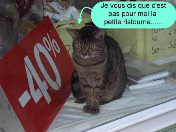 chat d'occase