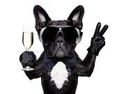 27913289-bouledogue-francais-avec-un-verre-de-champagne-et-.jpg