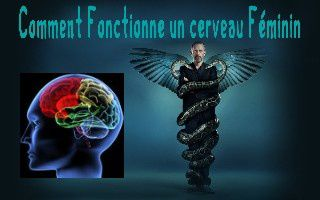 pps comment fonctionne un cerveau f minin humour. Black Bedroom Furniture Sets. Home Design Ideas