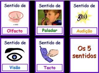 5_sentidos.png