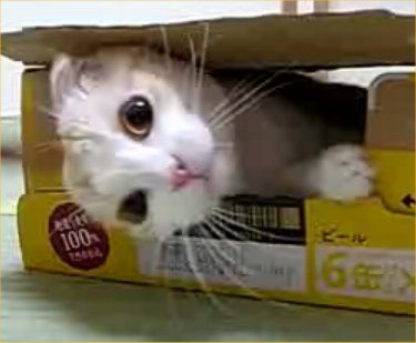 dont-disturb-this-cat-in-the-box-1.jpg