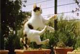 cat-slow-motion-image2.jpg