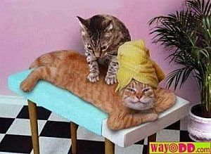 funny-pictures-the-cat-massage-1OV-copie-1.jpg