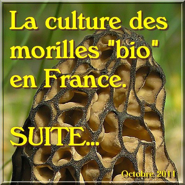 Culture des morilles in Natures Paul keirn (1)