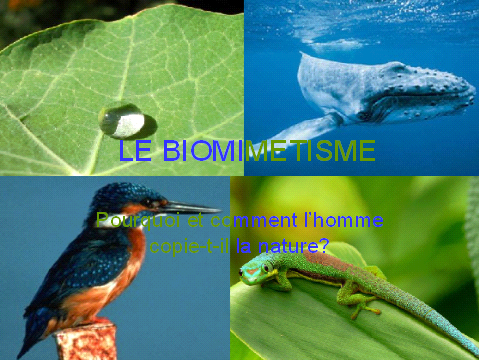 biomimetismecouverture.PNG