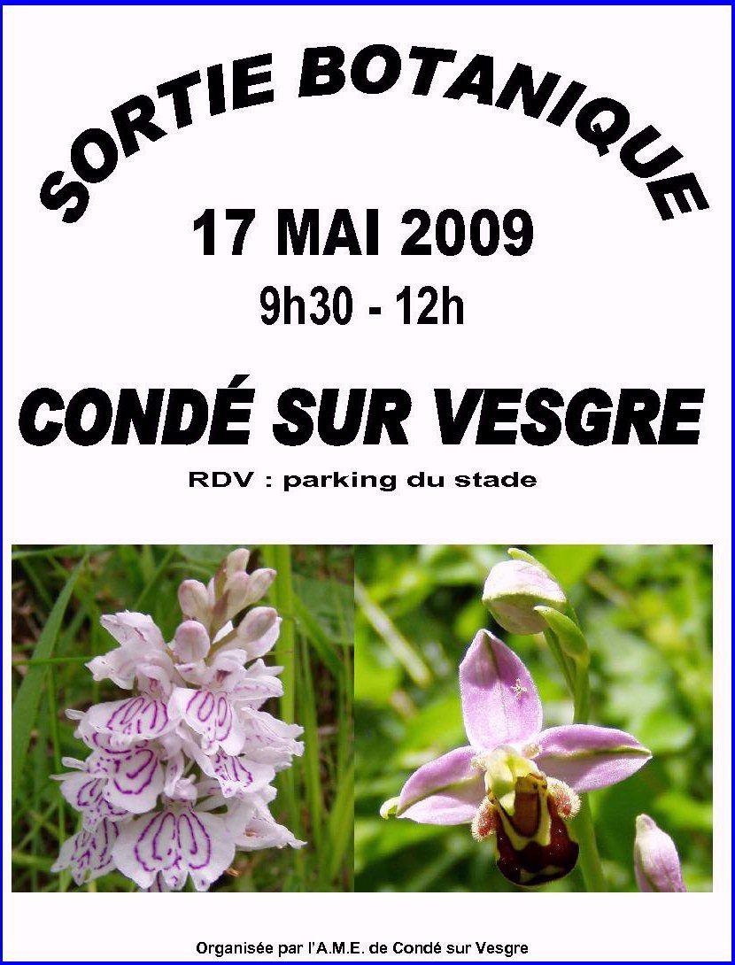 Annonce de la sortie botanique du 17 mai 2009 - Photos de Dactylorhiza maculata à gauche et d'Ophrys apifera à droite