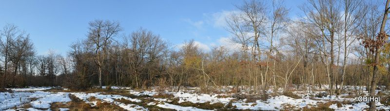 Panorama-bois-camp.JPG