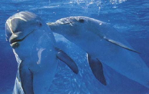 delfin-verbot