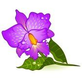 9871880-beautiful-violet-orchid-vector.jpg