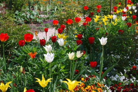 tulipes-giverny-1