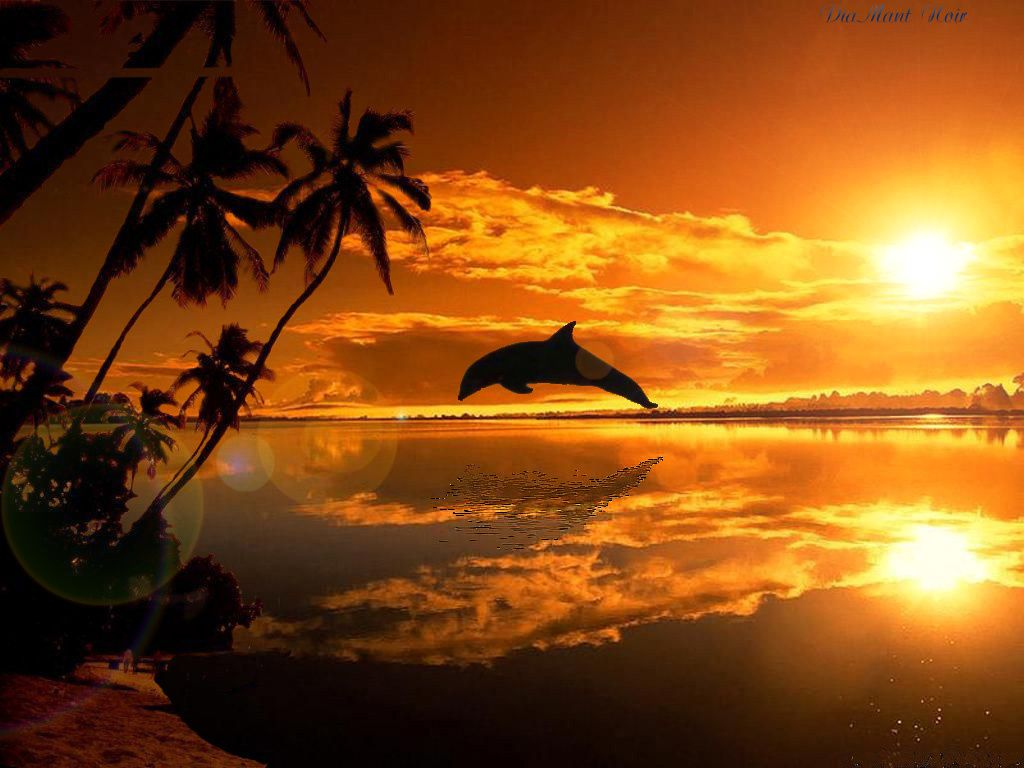 Wallpaper fond d 39 cran dauphin coucher de soleil for Photo la nature gratuit