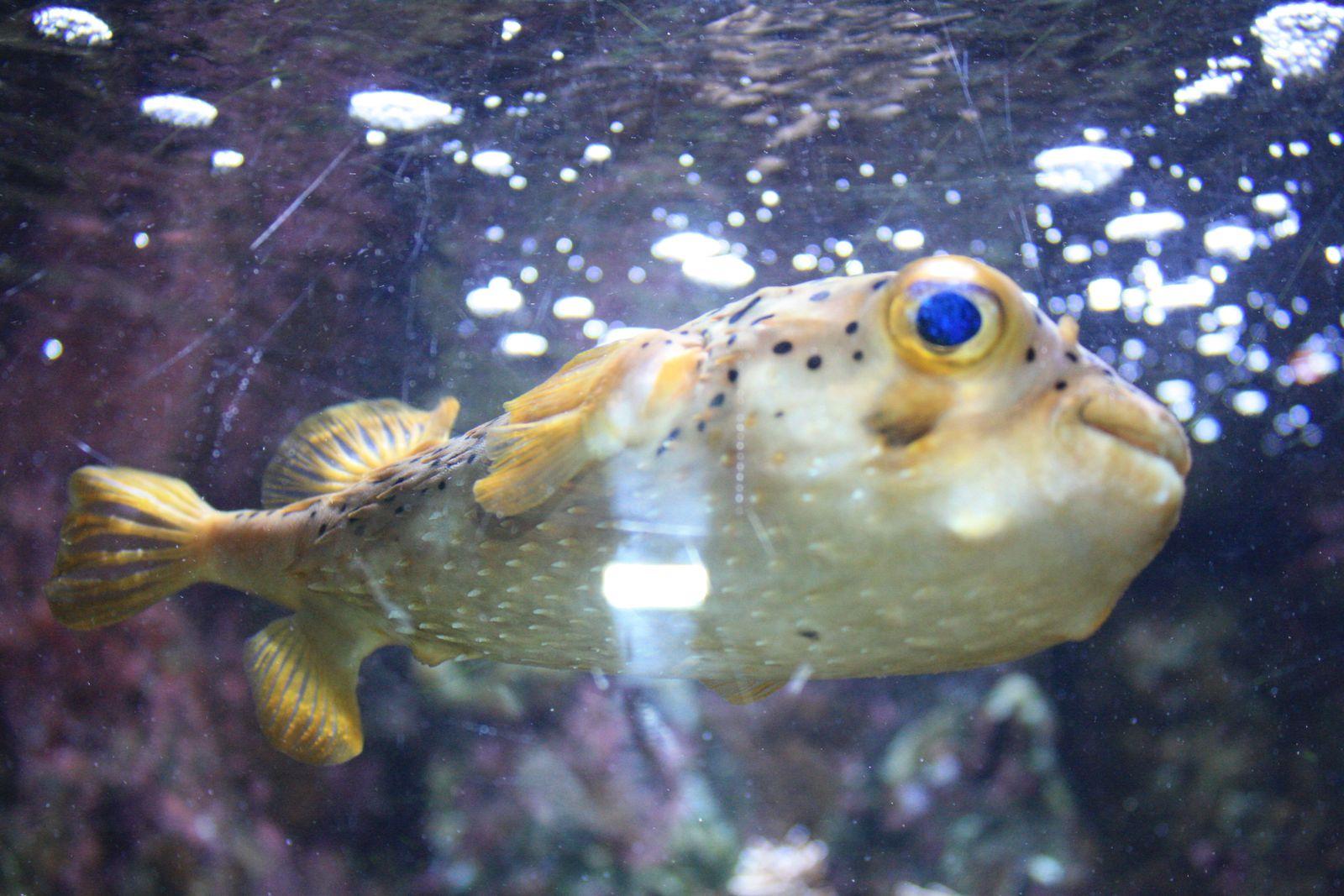 aquarium de pointe 224 pitre le de paniproblem971